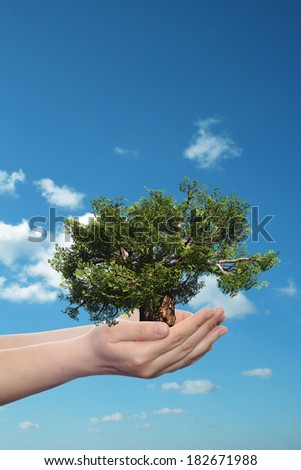 Concept or conceptual human man or woman hand holding a green summer tree and blue sky with clouds ecology background for environment, growth, eco, protection, conservation, organic, bio, love, energy