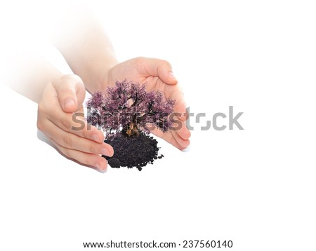 Concept or conceptual human man or woman hands holding protecting growing tree in earth isolated on white background, metaphor to growth, environment, ecology, care, gardening, protection or success