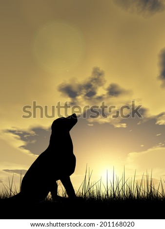 Concept or conceptual young beautiful black cute dog silhouette in grass or meadow over a sky at sunset landscape background - stock photo