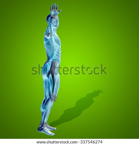 Concept strong human or man 3D anatomy body with muscle for health or sport over green for medicine, sport, male, muscular, medical, health, medicine, biology, anatomical, strong fitness design - stock photo