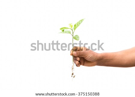 Concept successful hand holding new life plant in white background - stock photo
