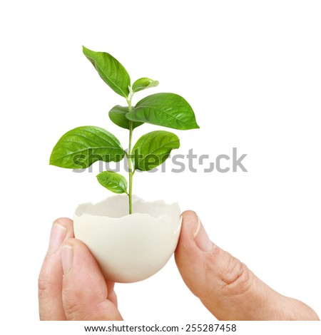 concept, symbolizing new life or new initiative  - stock photo