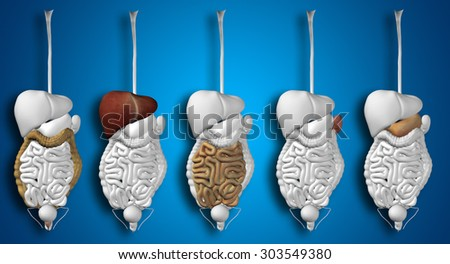 Conceptual anatomical human or man 3D set or collection of digestive system on blue background metaphor to anatomy, medical, colon, liver, body, stomach, medicine, intestine, biology, internal digest - stock photo