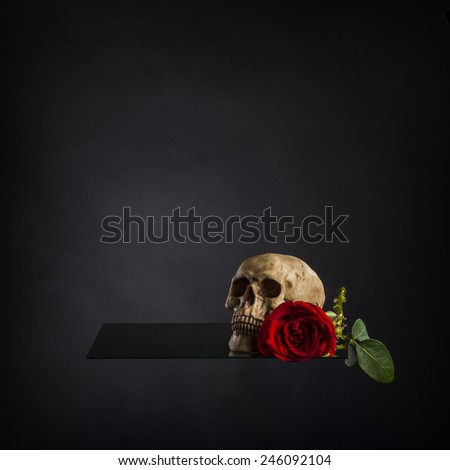 Conceptual Human Skull and Red Rose Flower on Hollow Platform. Captured with Gradient Gray Background - stock photo