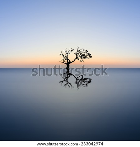 Conceptual image of single tree in still water - stock photo