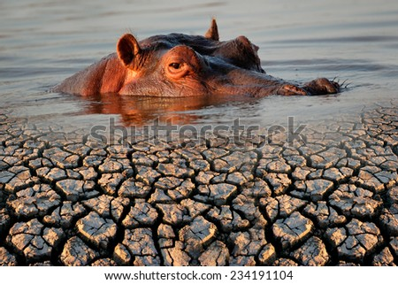 Conceptual images of a hippopotamus and drought as a result of global warming - stock photo