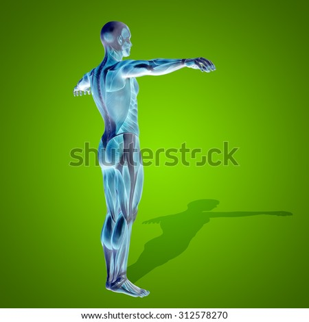 Conceptual strong human, man 3D anatomy body with muscle for health,  sport ongreen background for medicine, sport, male, muscular, medical, health, medicine, biology, anatomical strong fitness design - stock photo