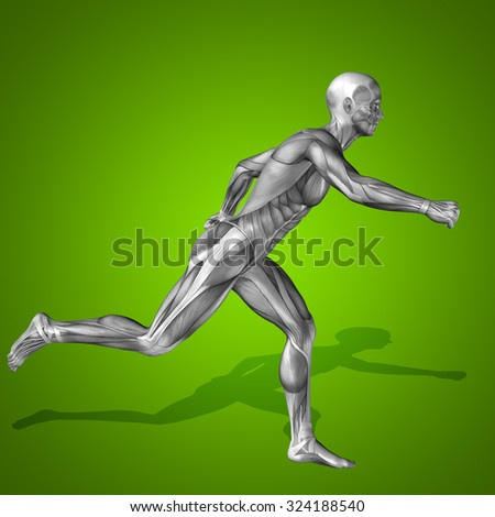 Conceptual strong human man 3D anatomy body with muscle for health sport over green background for medicine, sport, male, muscular, medical, health, medicine, biology, anatomical strong fitness design - stock photo