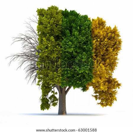 Conceptual tree in four seasons - 3d render illustration - stock photo