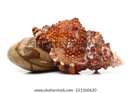 Conch and pebbles   - stock photo