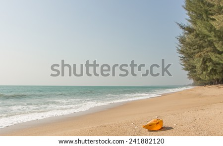 Conch shell on beach with waves. - stock photo