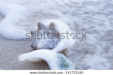 Conch shell & sponge in the ocean - Seven Mile Beach, Grand Cayman Islands - stock photo