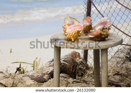 conch shells for sale on stool - stock photo