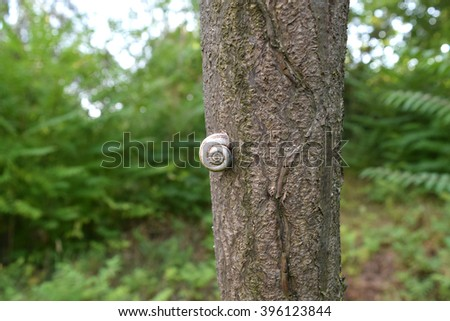 Conch snail on a tree trunk. Land with clam shell. - stock photo
