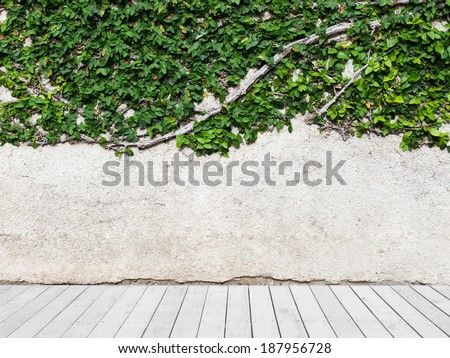 concrete blank background with green leaves and wooden floor