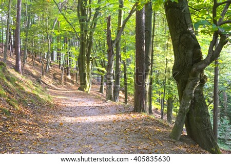 Concrete path among the trees in the park