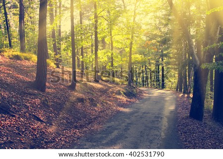 Concrete path among the trees in the park. Sunlight - stock photo