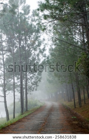Concrete pathway between pine tree
