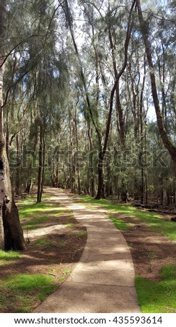 Concrete pathway in forest of ironwood trees in Palaau State Park on Molokai. - stock photo