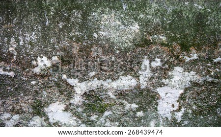 Concrete surface with moss and rich texture.