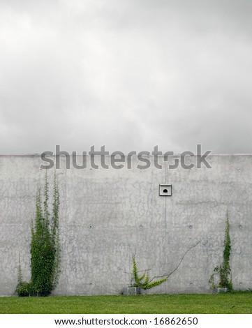 concrete vs. ivy - stock photo