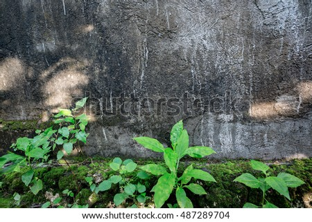 Concrete wall texture background with green young leaves at bottom and sunlight spots spreaded on surface