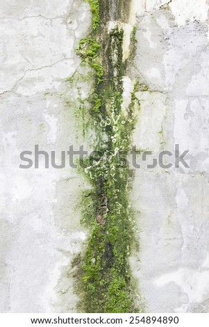 Concrete wall with moss, detail of an old wall abandoned - stock photo