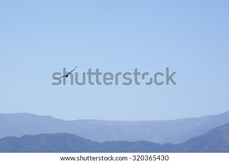 Condor flying and looking for a prey in the blue sky of San Juan with mountains in the background. Argentina