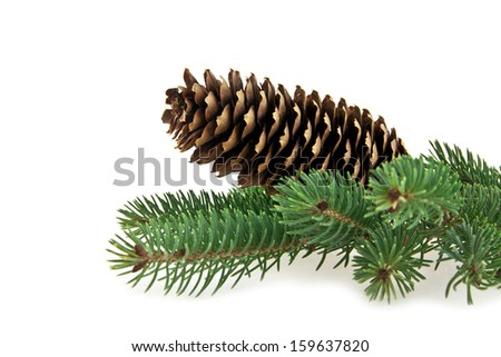 cone and branch of fir-tree on a white background - stock photo