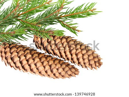 Cone on fir branch isolated on white - stock photo