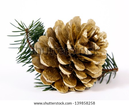 Cone on twigs of the spruce - stock photo