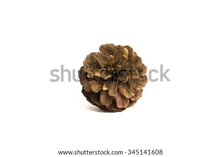 Cone pine isolate for Christmas decorate on white background  - stock photo