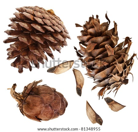 Cones collection set  isolated on white background  - stock photo