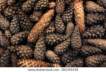cones of conifers - stock photo