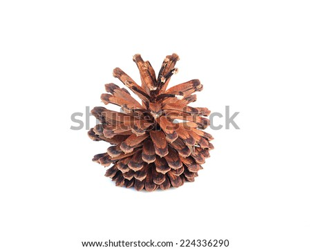 cones various coniferous trees on white background.