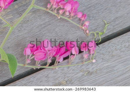 Confederate vine, Coral vine, Mexican coral vine, Mexican creeper, Queen's jewels, Queen's wreath flowers on wooden floor