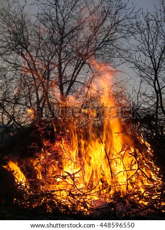 Conflagration or firestorm. Burning branches. Strong uncontrolled fire. - stock photo