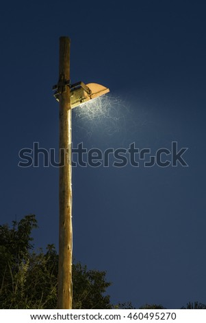 Confused insects fly around a bright lamp. Portrait exterior.