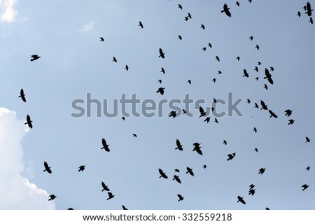 Congregation of blackbirds crows jackdaws birds flying in blue sky in winter season on natural background outdoor, horizontal picture  - stock photo