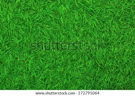 Conifer needles crumbled perfectly suited for the background New Year or Christmas card. - stock photo