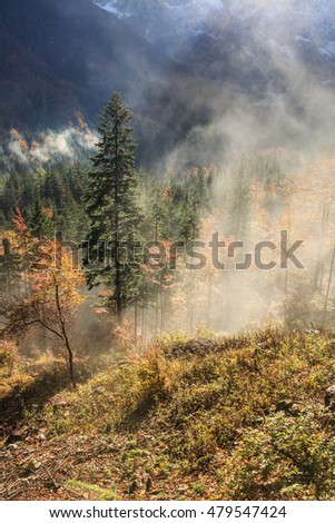 Coniferous and deciduous mountain forest in autumn colors, with morning foggy mist rising, sun rays penetrating through it. Seasons changing, unique sunlight concept, textured background.