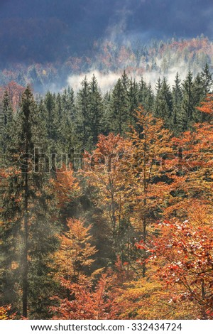Coniferous and deciduous mountain forest in autumn colors, with morning foggy mist rising, sunrays penetrating through it. Seasons changing, unique sunlight concept, textured background.  - stock photo