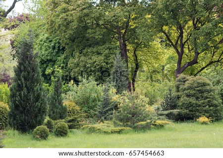 Coniferous and evergreen trees grow in the garden