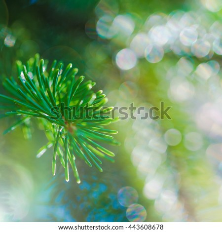coniferous evergreen fir trees wallpaper. shallow depth of field - stock photo