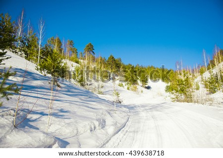 Coniferous forest in winter lighted with sun