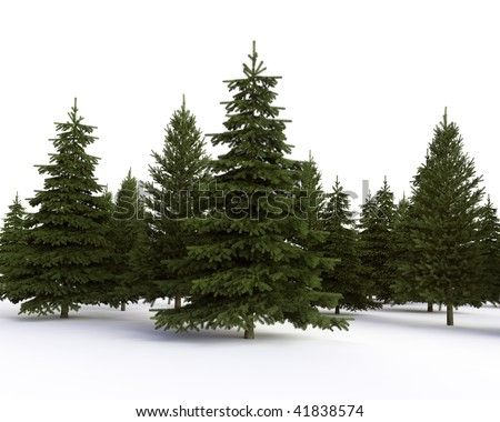 coniferous forest on  a white background - stock photo