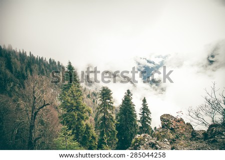 Coniferous Forest with cloudy Mountains Caucasus beautiful landscape moody weather colors - stock photo