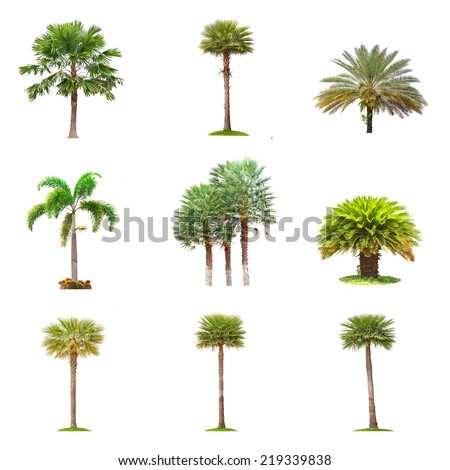 Conlection of palm tree isolated on white background. - stock photo