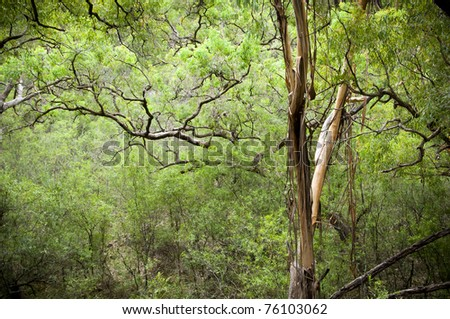 Conservation background - canopy in dense, lush forest