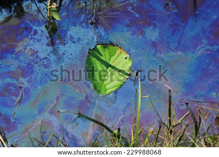 contaminated water with swimming leaf, environmental pollution - stock photo